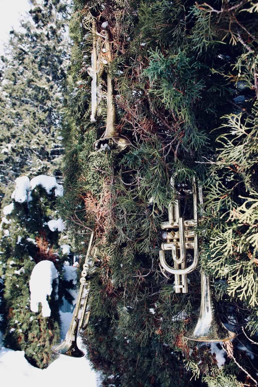 trumpet vine photo - close-up